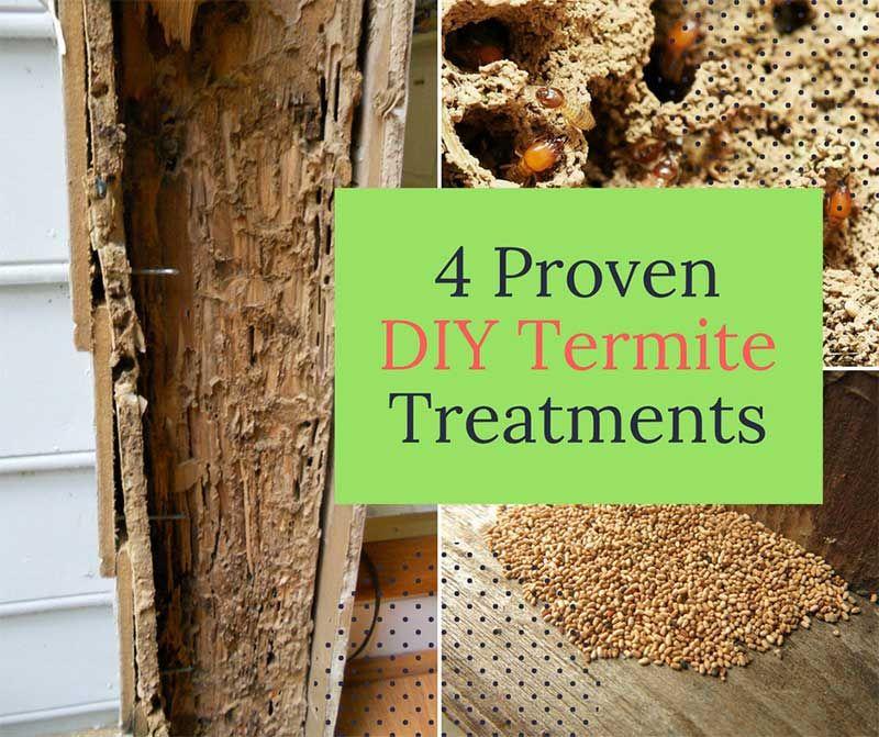 4 Proven DIY Termite Treatments Diy termite treatment