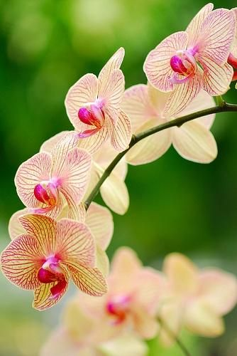 163 beautiful types of flowers a to z with pictures orchid there are so many different types of flowers from around the world this list offers some of the most popular that have their own spectacular features mightylinksfo