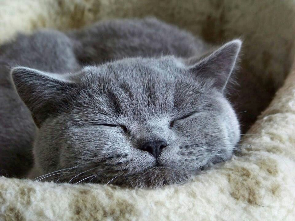 Dying Cat Sleeping With Eyes Open