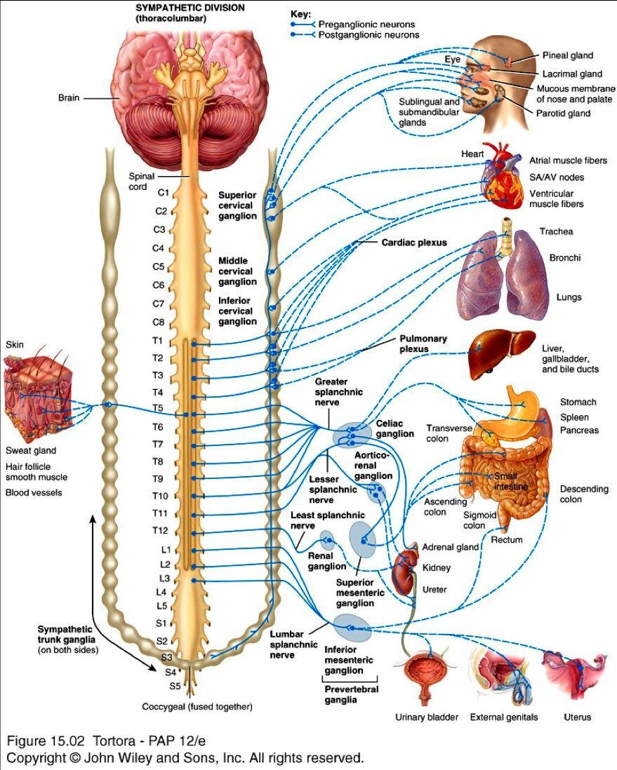 Pin de Jessica Joyce en Systems: Gastrointestinal | Pinterest