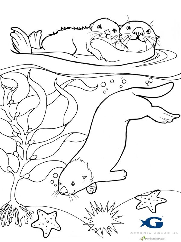 sea otter coloring pages google search - Otter Coloring Pages