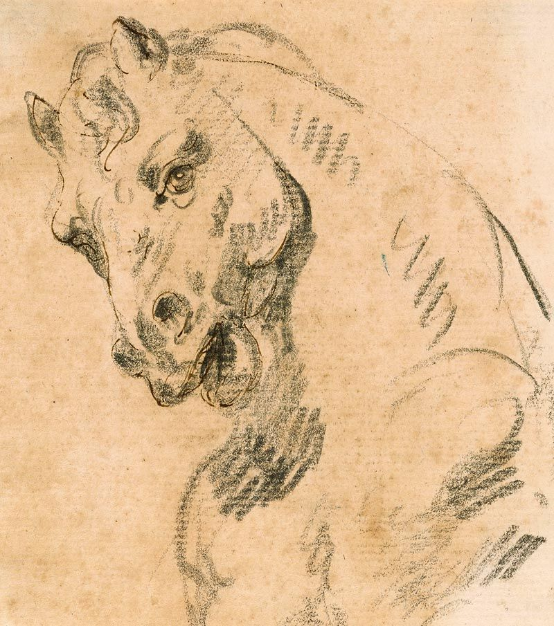 Attributed to Giovanni Battista Tiepolo | 1696-1770 | Head of a Horse | The Morgan Library & Museum