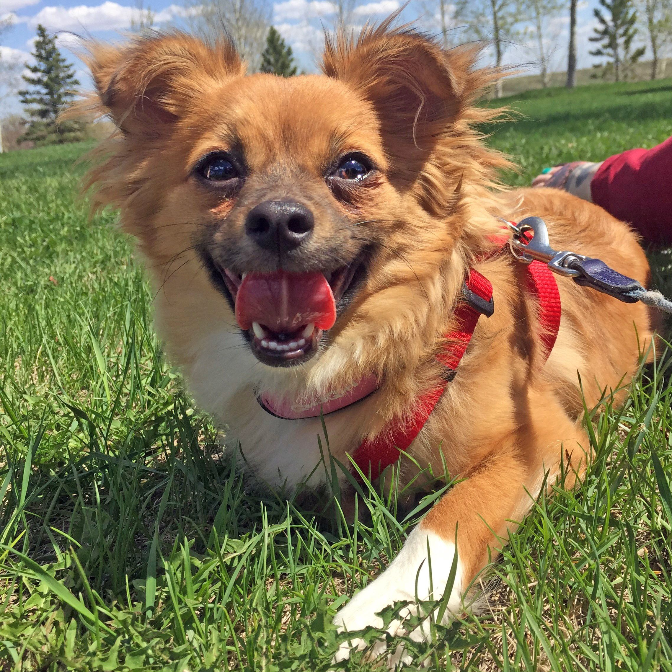 This Is Tiki She Is A Tenderhearted Gal Who Is Looking For A