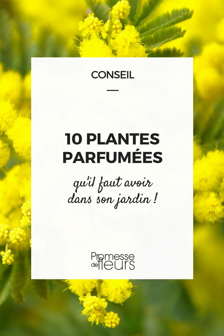 Les 10 meilleures plantes à fleurs odorantes | Jardinage, Plantes et ...