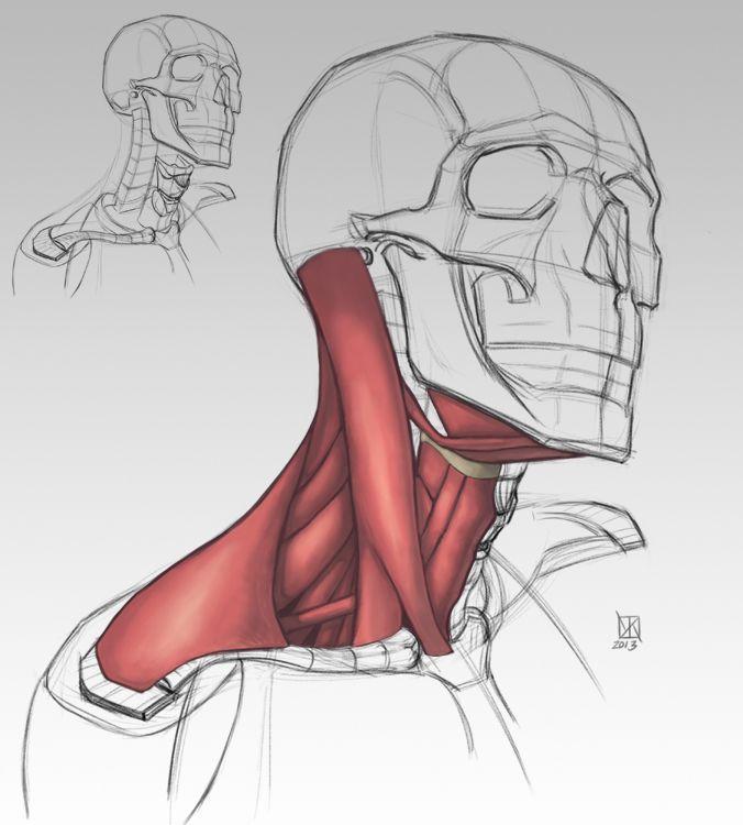 828d999f9b6eebb4d5079e56ddd02e1a.jpg (676×750) | Anatomy | Pinterest ...