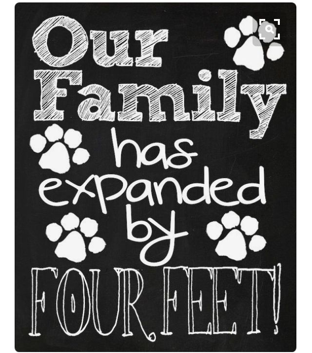 New Puppy Announcement Our Family Has Expanded By Four Feet Cute Funny Printable Chalkboard New Pet Announcement Digital File Puppy Announcement New Puppy Pet Announcement