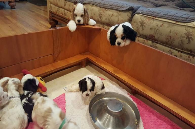 Finding good homes for puppies is often the hardest part