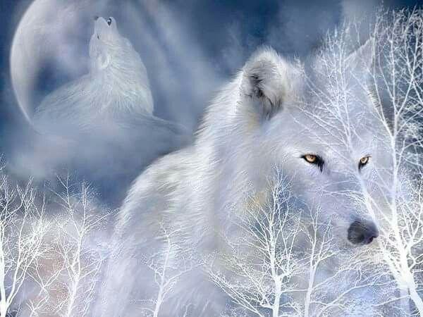 Un Loup Blanc Dans La Neige Images Loup Fond D Ecran Loup Animales