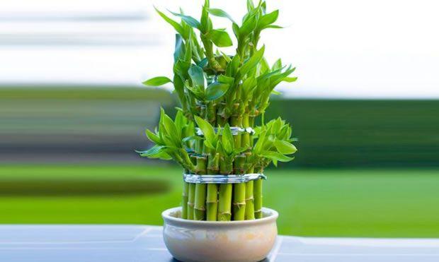 5 plantas de interior ideales para espacios con poca luz for Plantas de interior que no necesitan luz