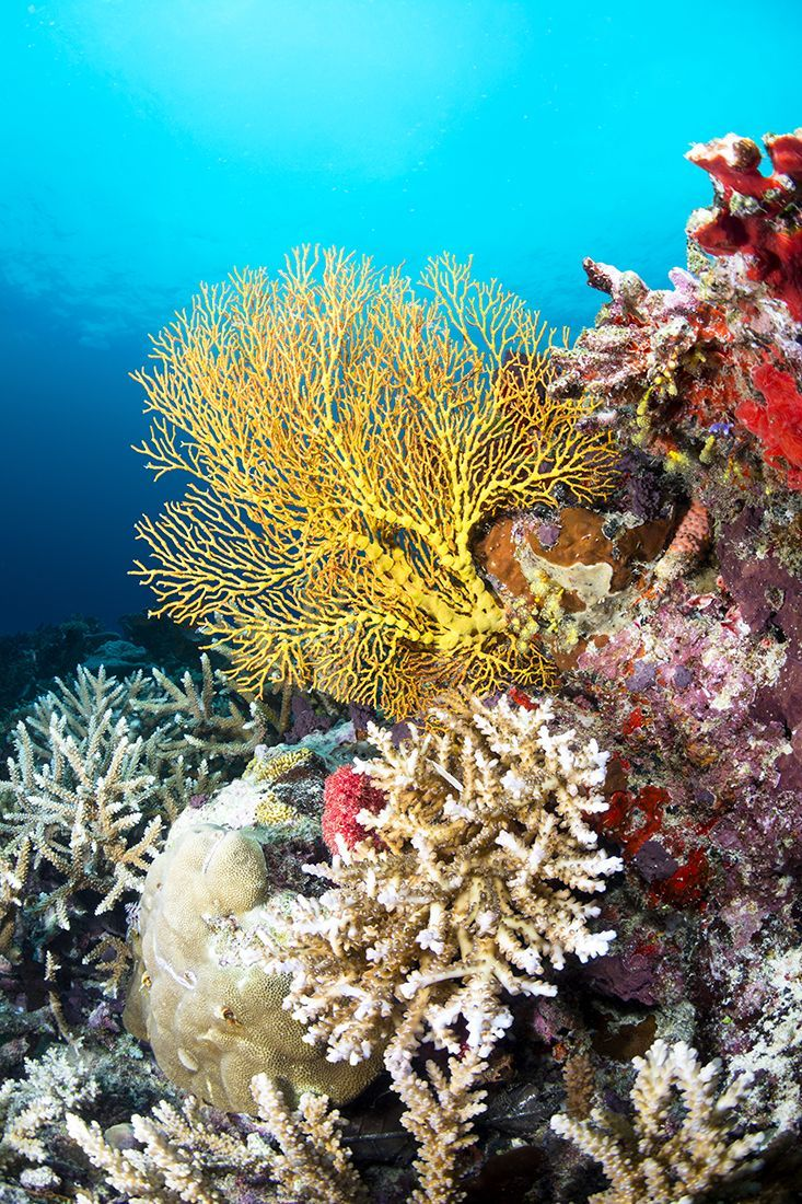 Rainbow Reef Diving Underwater Photography Fishingphotographyunderwater Underwater Photography Ocean Underwater Photography Coral Reef Photography