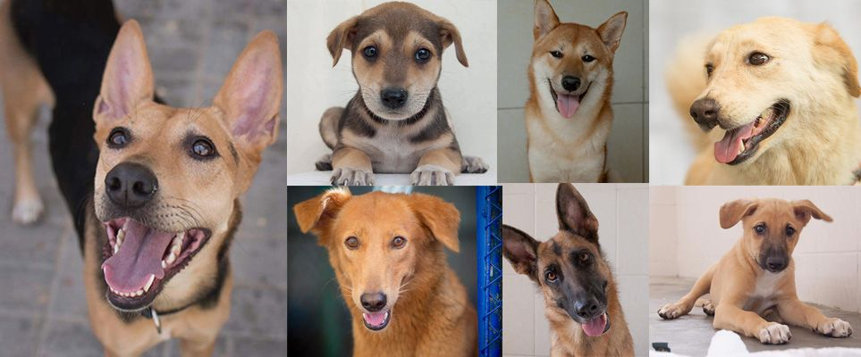 36 Dogs And Puppies In Dubai That Need Foster Or Forever Homes