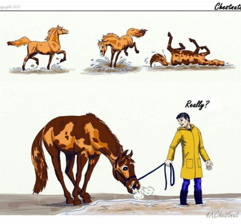 всему картинки про работу с лошадью приколы перевернут картинку удалят
