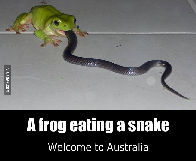 Welcome To Australia Australia Funny You Funny Best Funny Pictures