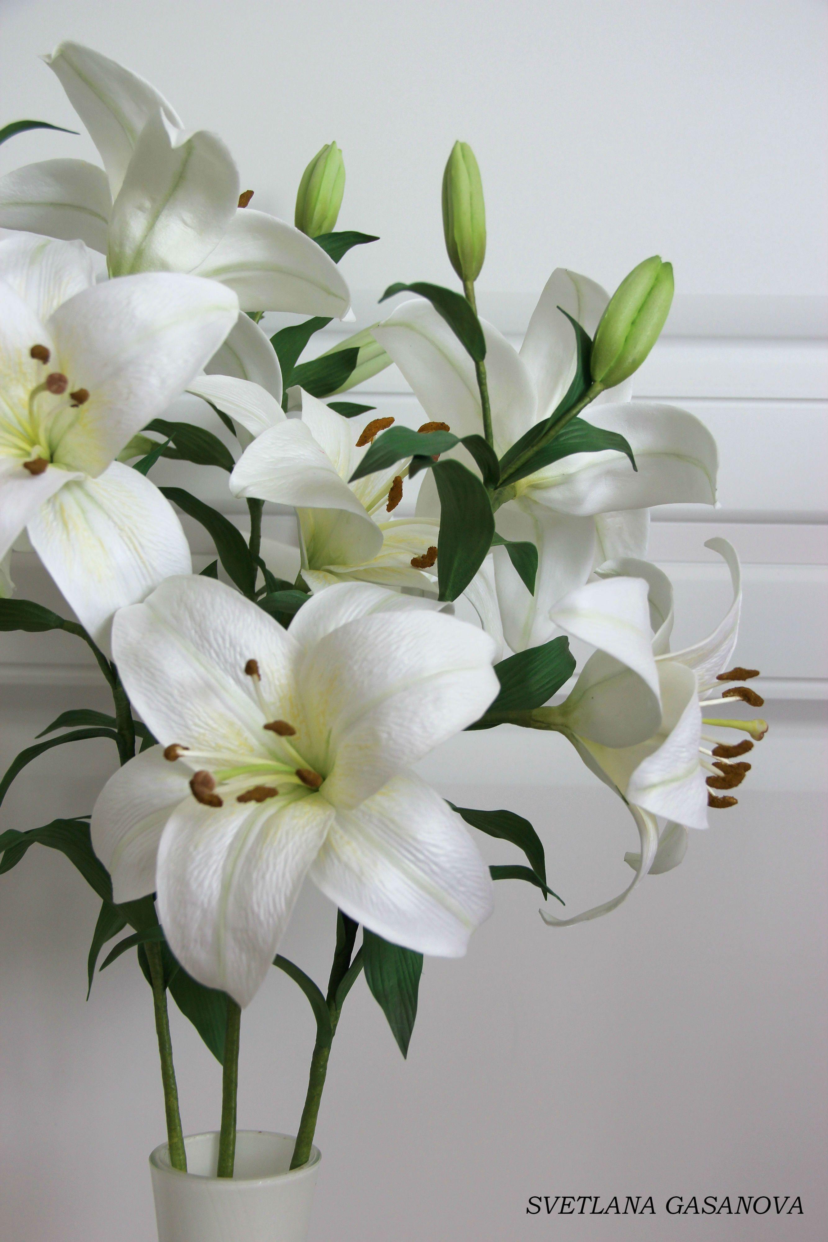 Лилия ольга цветы