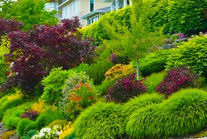 dwarf trees landscaping