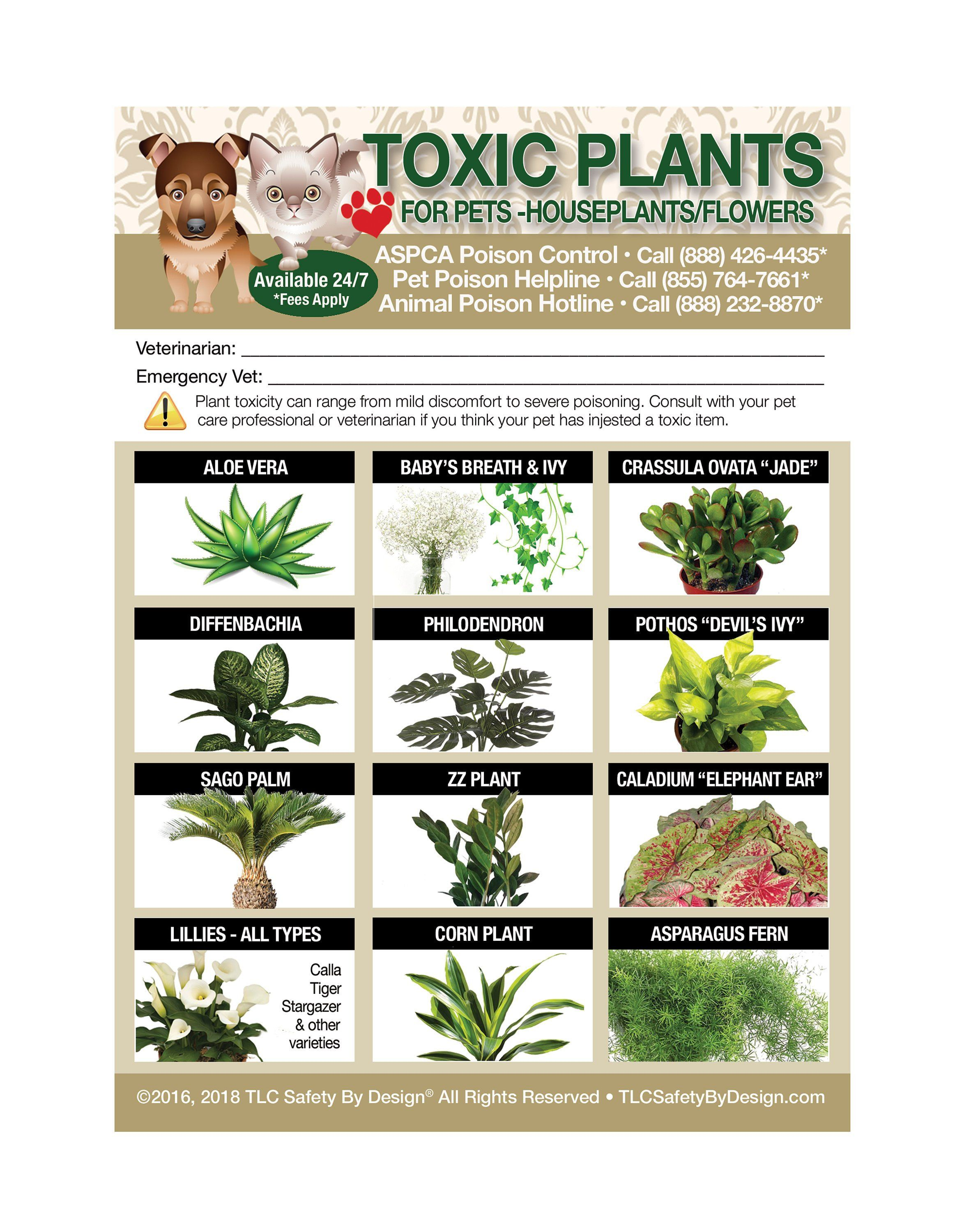 Poisonous Toxic Plants Flowers Trademarked For Pets Dogs Cats