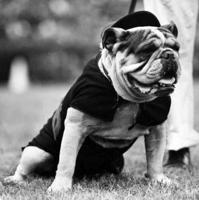 Pin On Live Mascots Georgia Bulldogs