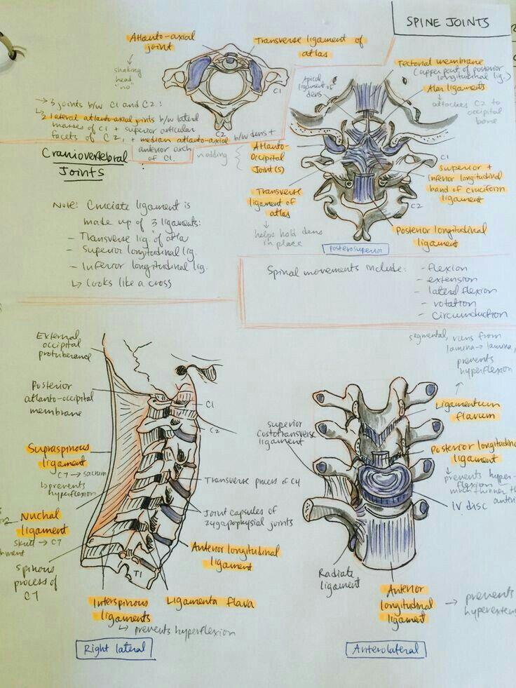 Pin de Estefani Araya en Anatomía | Pinterest | Apuntes, Anatomía y ...