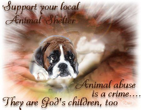 Support Your Local Animal Shelters Give Them Your Helping Hand Donations Food Blankets Beds Towels Shampoo Dish Animal Shelter Like Animals Animals