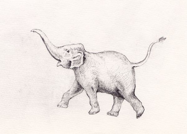 17+ images about elephants on Pinterest   How to draw, Pencil ...