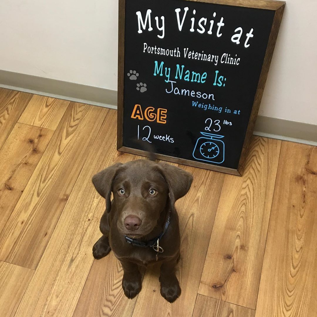 76 Likes 4 Comments Portsmouth Veterinary Clinic