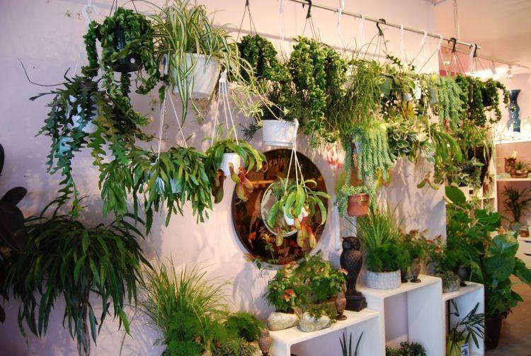 geeignete arten zimmerpflanzen in blument pfe h ngen lassen plants indoors pinterest. Black Bedroom Furniture Sets. Home Design Ideas