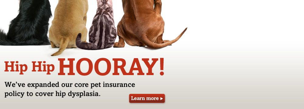Dog And Cat Bums Trupanion Pet Insurance Now Covers Hip