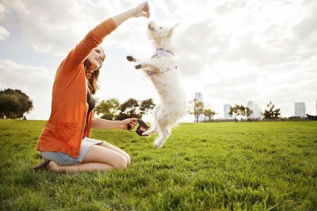 dog training helpwithmydog Dog training, Training your