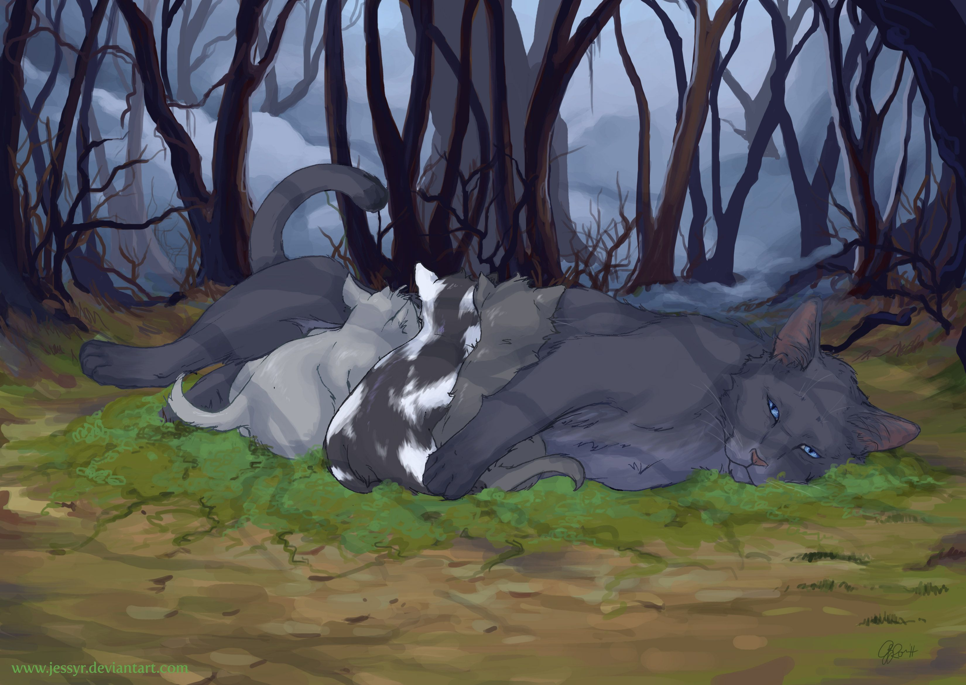 And Black Oc Cat And Gray White Warrior