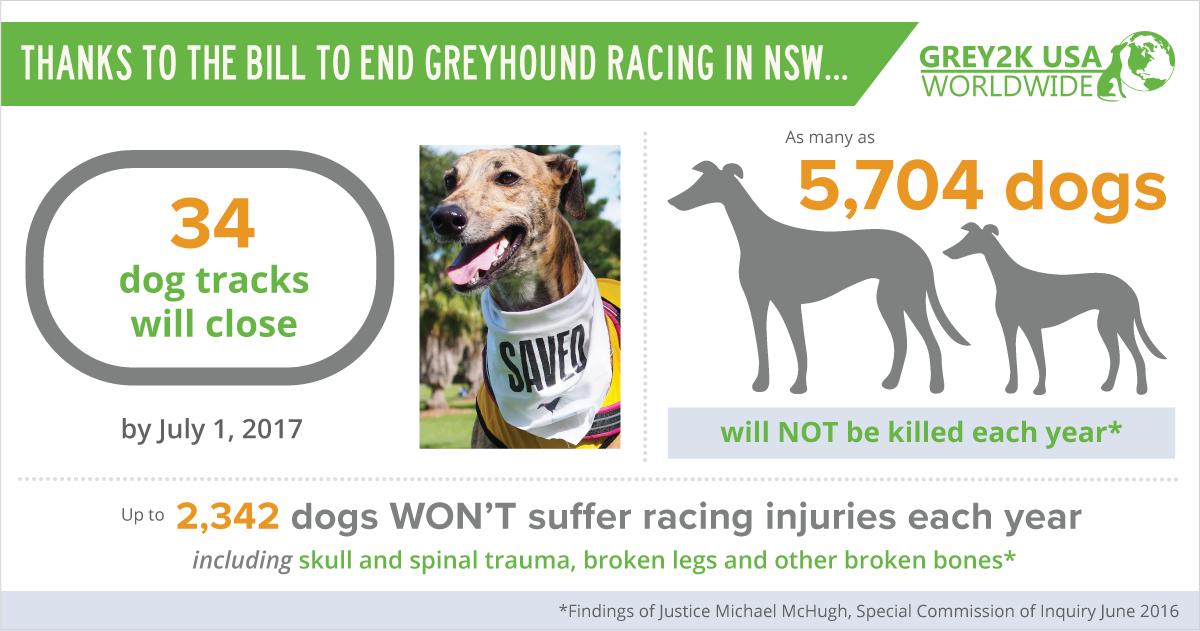 Grey2k Usa Worldwide A Global Voice For Greyhounds Greyhound Greyhounds Racing Broken Leg