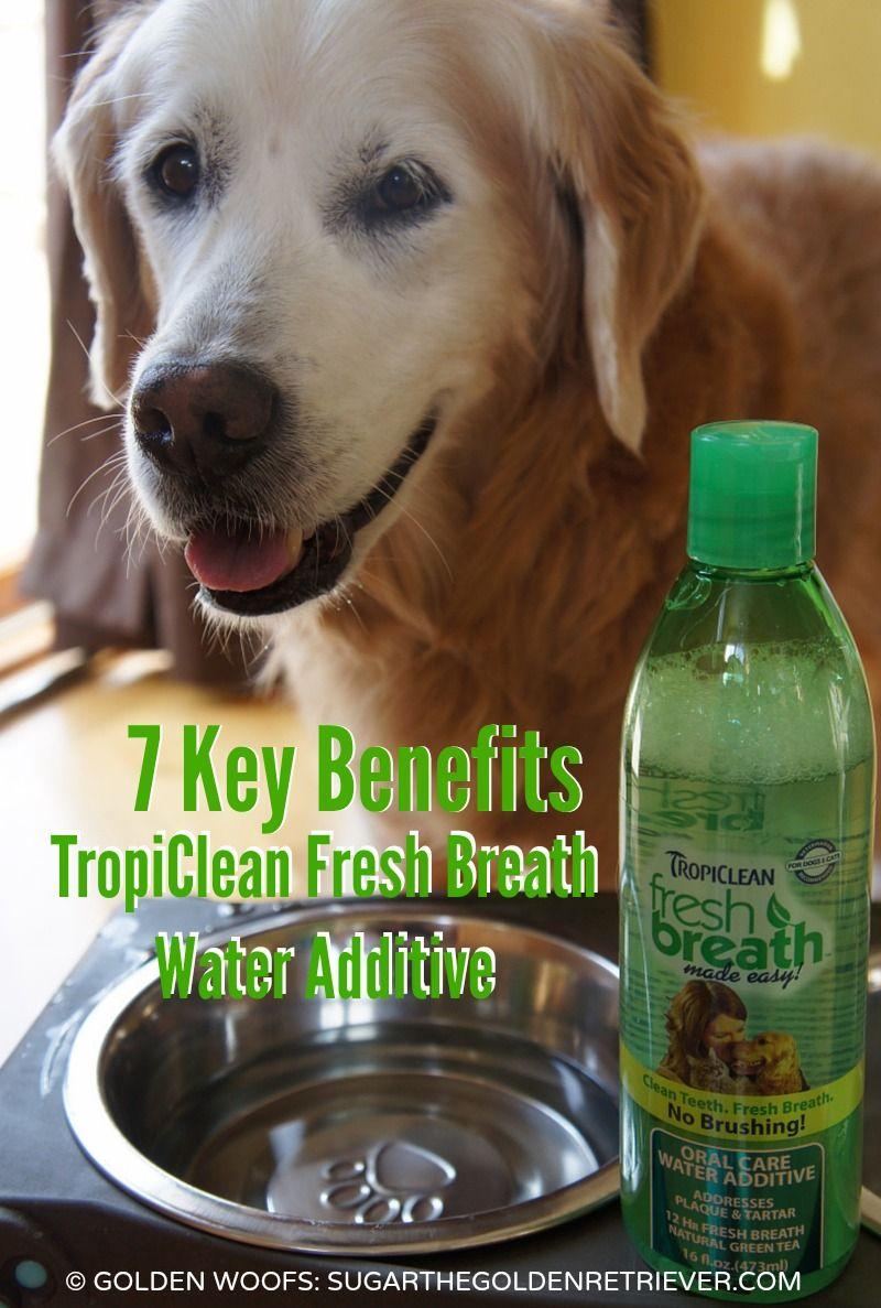 Simple Dental Solution For Your Dog SmoochUrPooch Pet