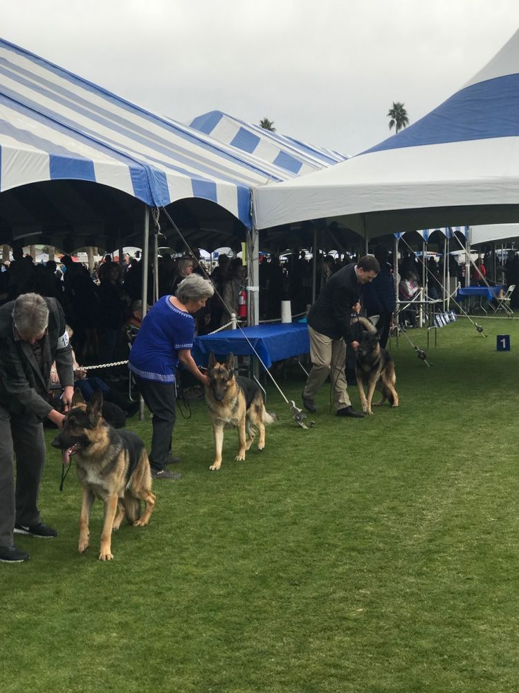 Pin On Palm Springs Kennel Club 2019 Indio Ca