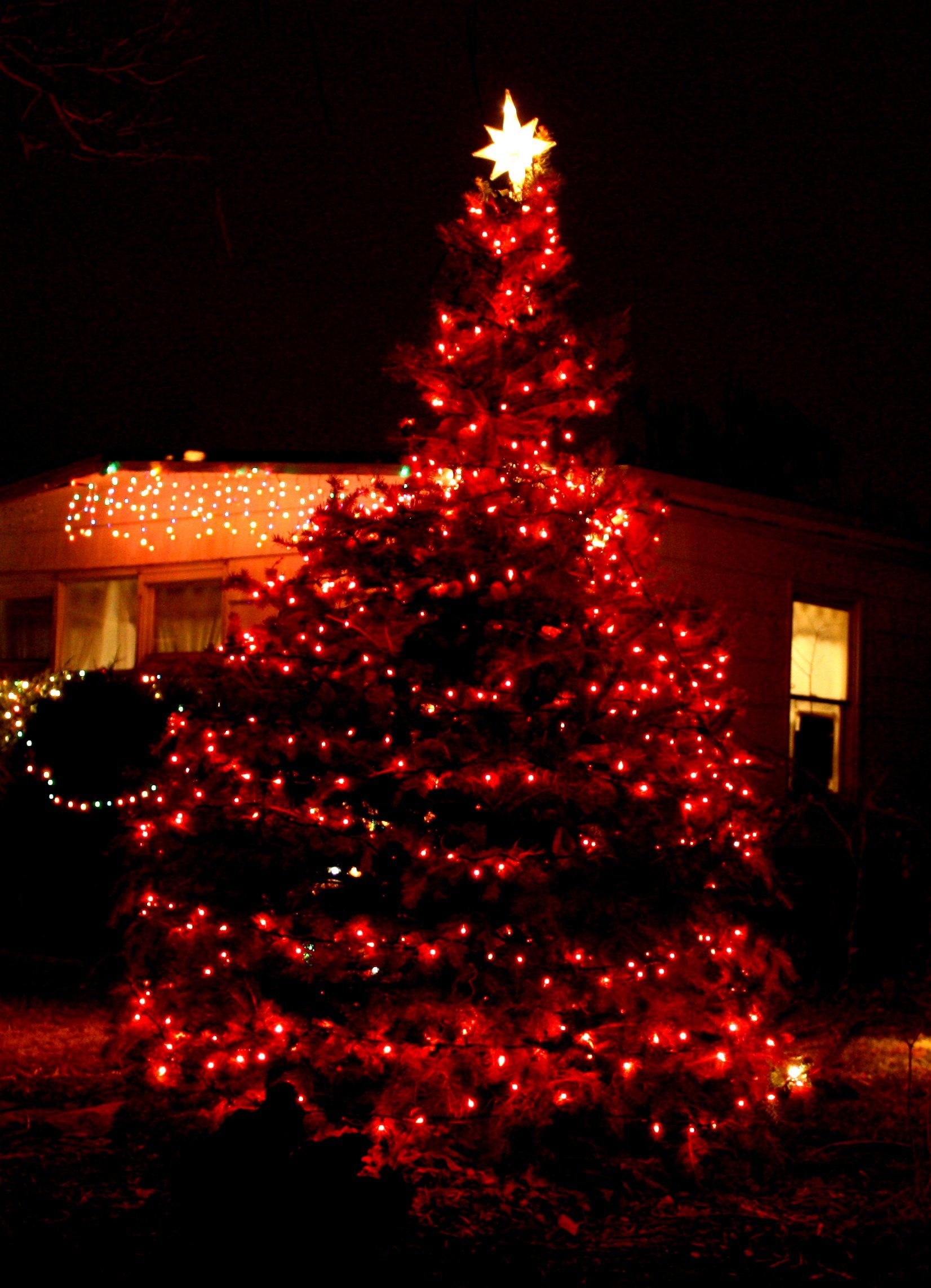 Christmas Lights Photo Features An Outdoor Christmas Tree Decoratied With Red Lights Outdoor Christmas Tree Christmas Lights Red Christmas Lights