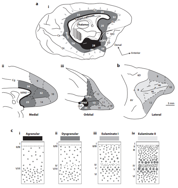 4 what is the difference between the cortex and the neocortex in brain 4 what is the difference between the cortex and the neocortex in the mammalian ccuart Images