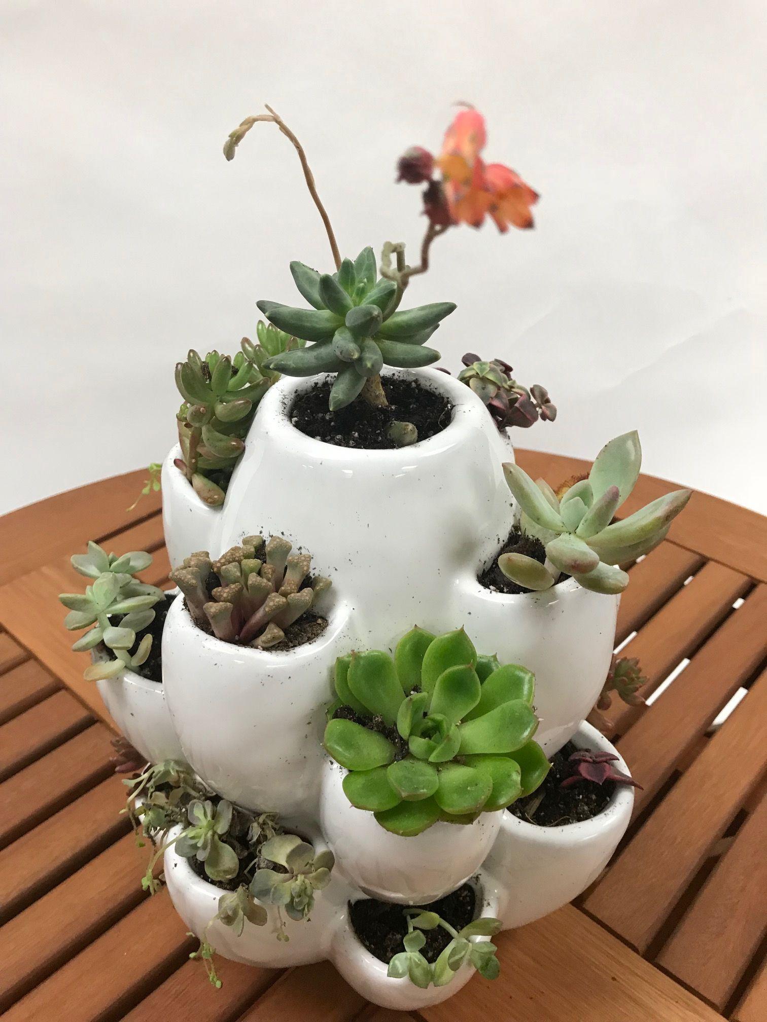 Cacti Planter Walmart Com In 2020 Succulent Planter Diy Cactus Planter Pottery Plant Pots
