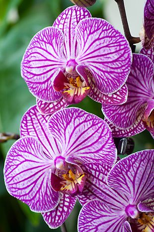 orchidee sauvage de chine