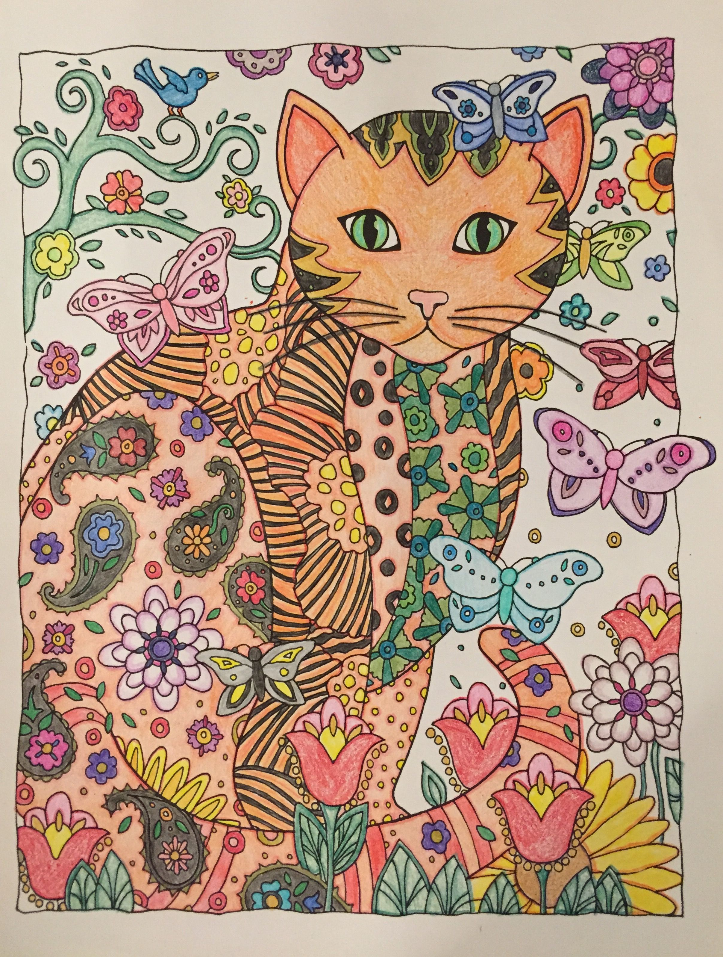 CRAZY CATS WITH BUTTERFLY For More Great Pins Go To KaseyBelleFox