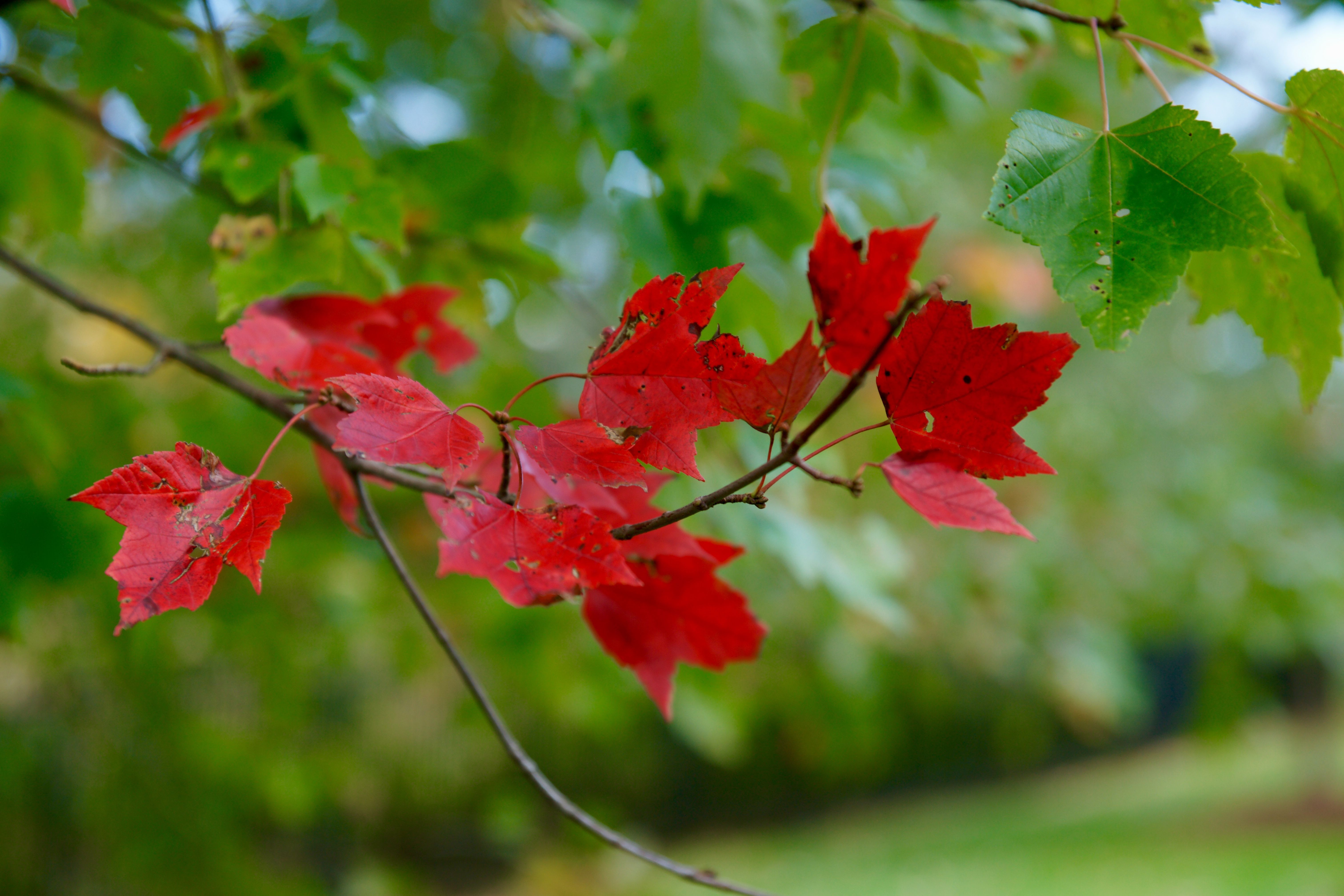 Belo contraste entre folhas.