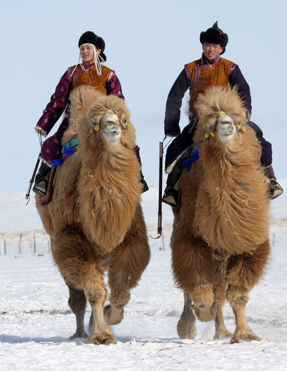 Festival des 1000 chameaux - Circuit Mongolie | Mongolie, Chameau et Visage du monde