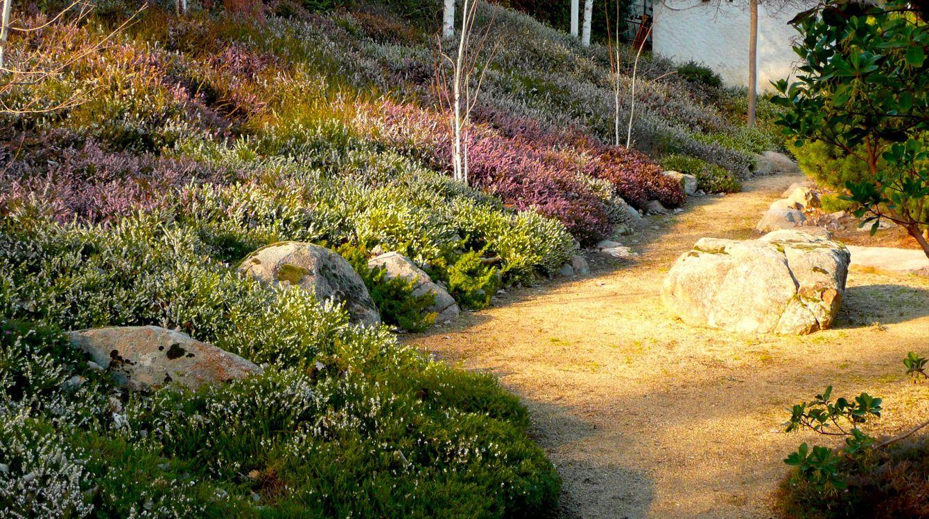 Garden of heathers in Somosaguas, Madrid : Urquijo-Kastner ...