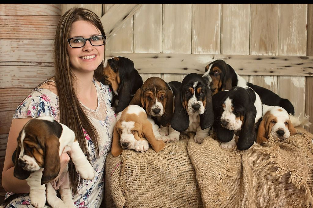 Blue Mountain Bassets Has Puppies For Sale On AKC