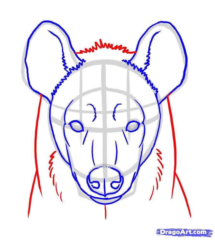 How To Draw Hyenas Step 6 Animal Reference Drawings Art Art