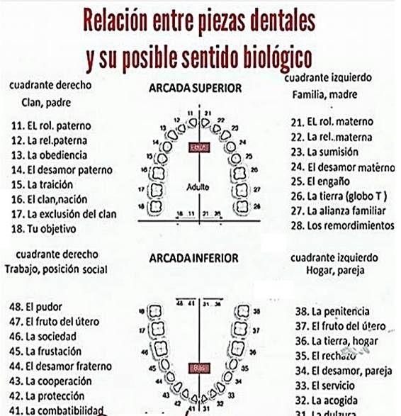 Resultado de imagen de dientes descodificacion familiar