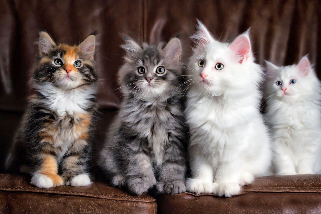 Kittens Cats Cute (With images) Kittens cutest
