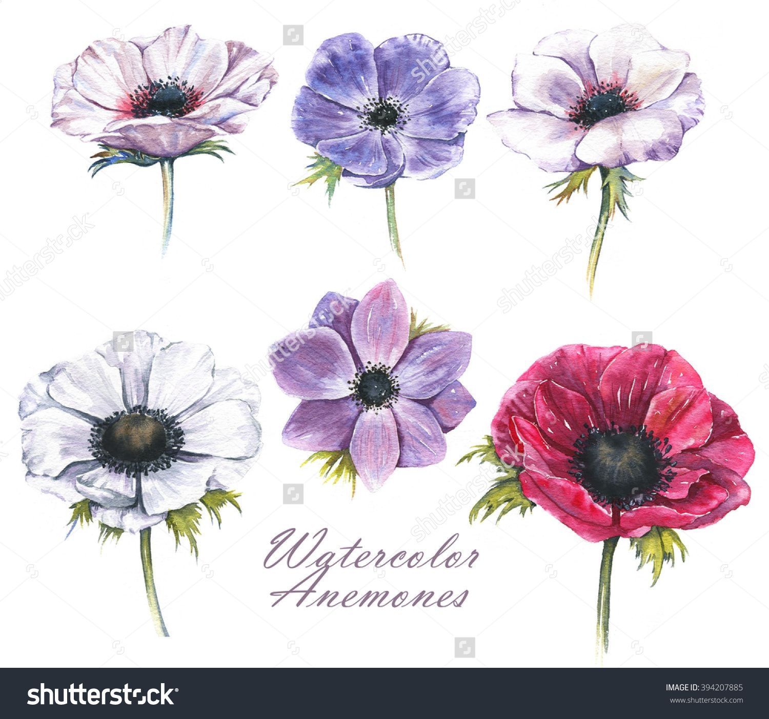 Pin By Mirella Brai On Spring Plant Drawing Anemone Tattoo Flower Painting