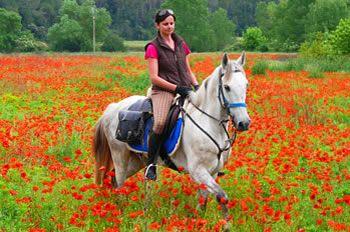 Best 25 Riding Holiday Ideas On Pinterest Horses Trail