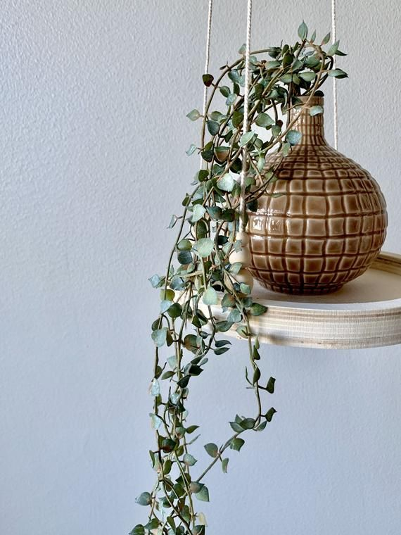 Hanging Shelf | Plant shelf | Macramé Shelf | Floating shelf | Beaded shelf | Round | Tray Shelf | Wooden shelf | Minimalist | Plant hanger
