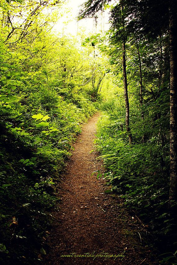 Nature Photograph Forest Trail Path Oregon 20x30 Large Wall Decor