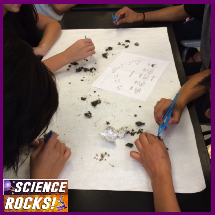 Owl Pellet Dissection Lab Report With images   Owl ...