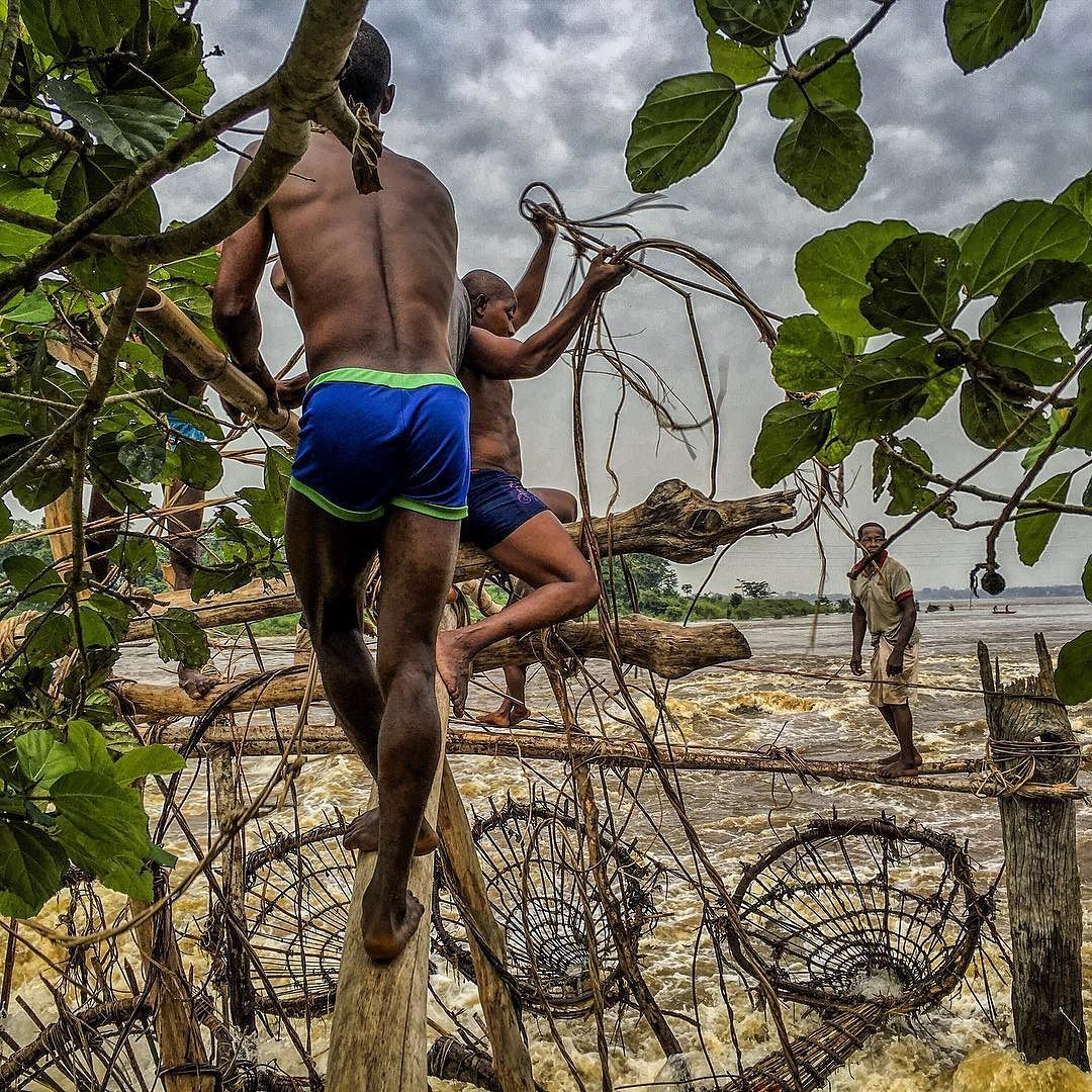 Photo by @michaelchristopherbrown. Fishermen from the Wagenia tribe climb bamboo scaffolding and prepare their nets at Stanley Falls located on the Congo River near the city of Kisangani Democratic Republic of the Congo. Fish swim downriver and once in the wooden nets they become trapped unable to free themselves against the current. Twice a day these Wagenia men use vines to hoist the nets up and climb down to check for fish. For more follow @michaelchristopherbrown by natgeo
